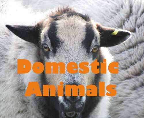 domestic animals link